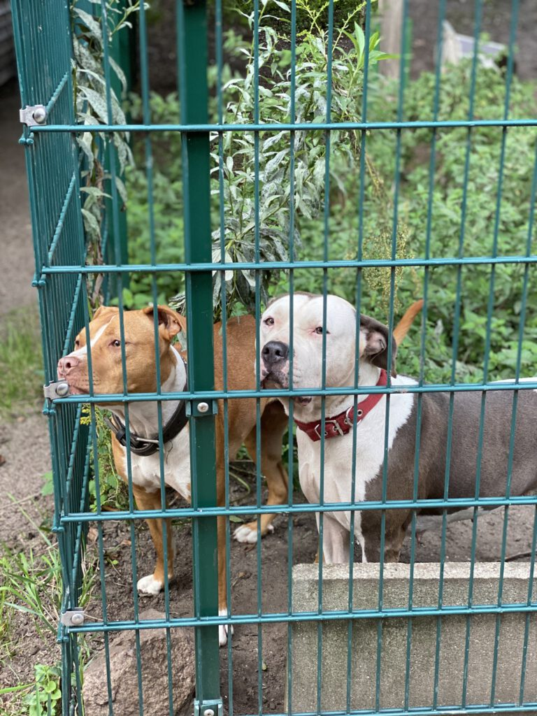 Hunde im Tierheim an der Süderstraße © Lisa Maria Otte
