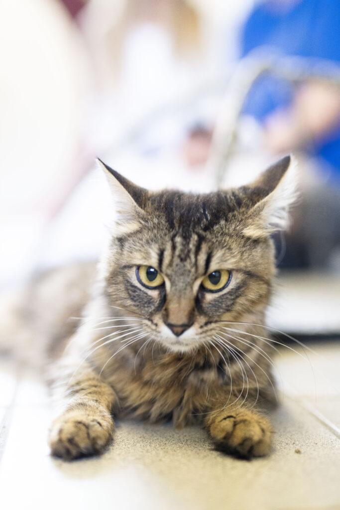 Katze im Tierheim an der Süderstraße